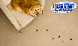Uh Oh Better call Fresh Start to clean my pet stains